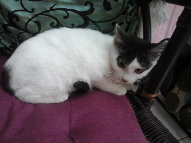 Léo - chaton (adopté dec 2015) Pdbjte