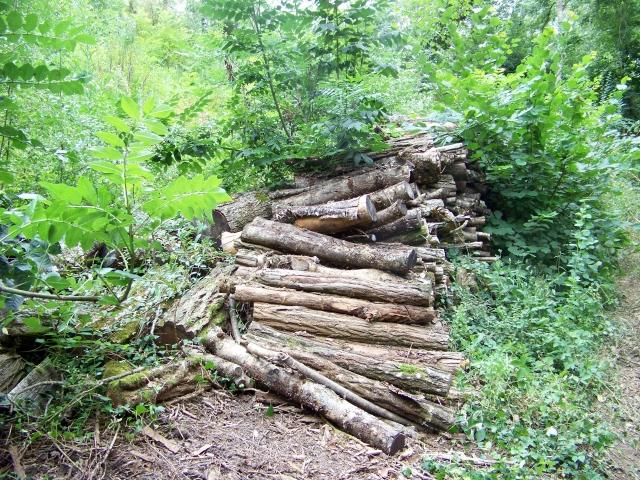 J'ai rentré le bois H4b1ti